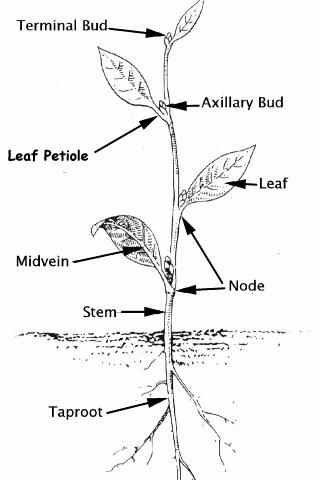 Different types of leaf margins